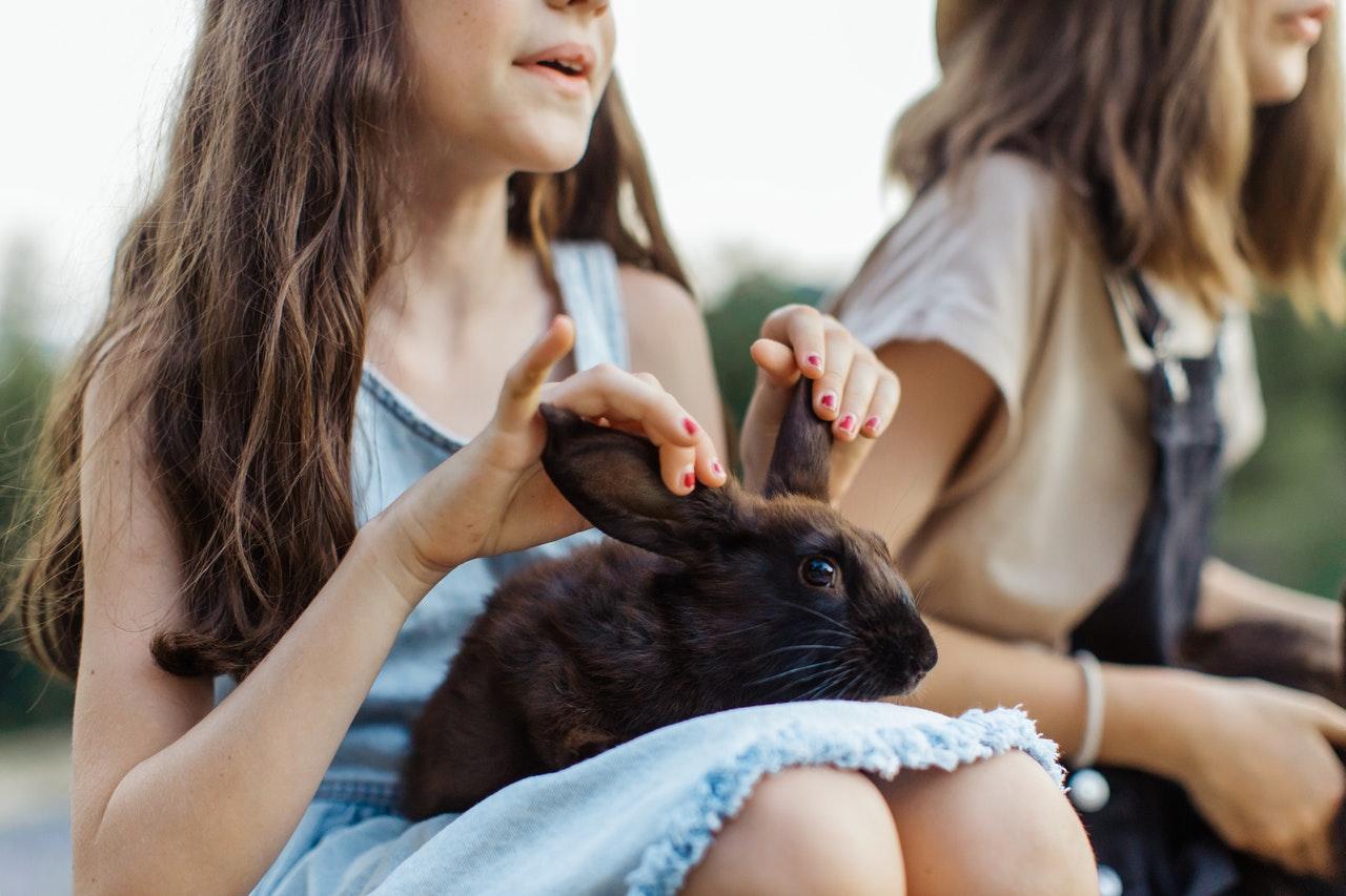 Czy królik miniaturka się poci? Czym się charakteryzuje futro królika?
