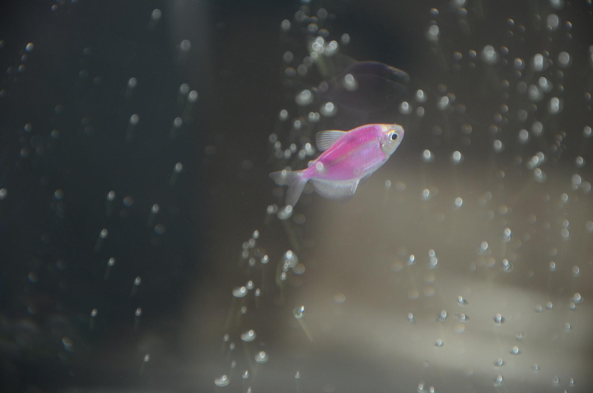 Mętna woda w akwarium to często spotykany problem spowodowany głównie namnażaniem pierwotniaków lub zielonych glonów.
