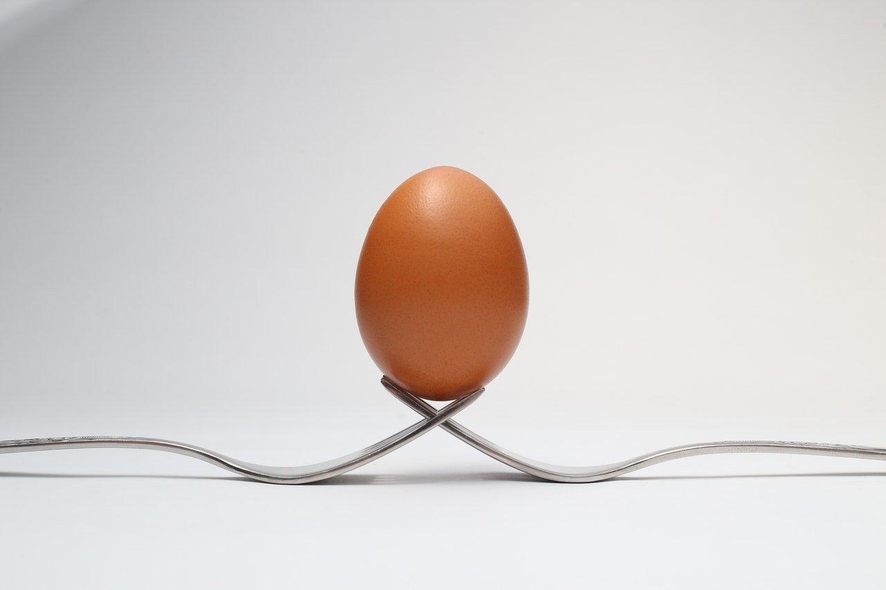 Czy pies może jeść surowe jajka? A może lepsze jest gotowane lub samo żółtko?