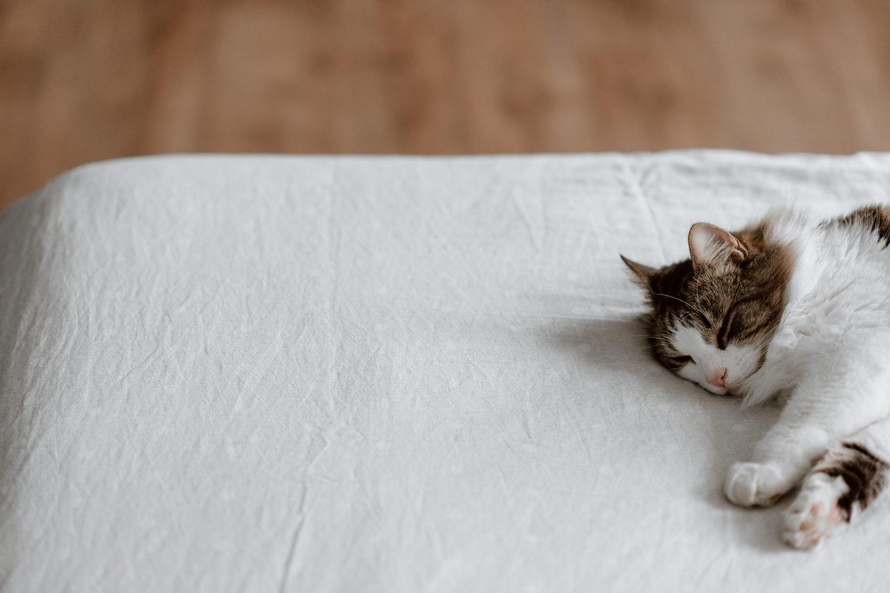 Koty wolnożyjące, a także te spędzające czas na dworze potrzebują pomocy w przetrwaniu zimnych nocy. Jak zrobić budki dla kotów i jakie warunki należy spełnić?