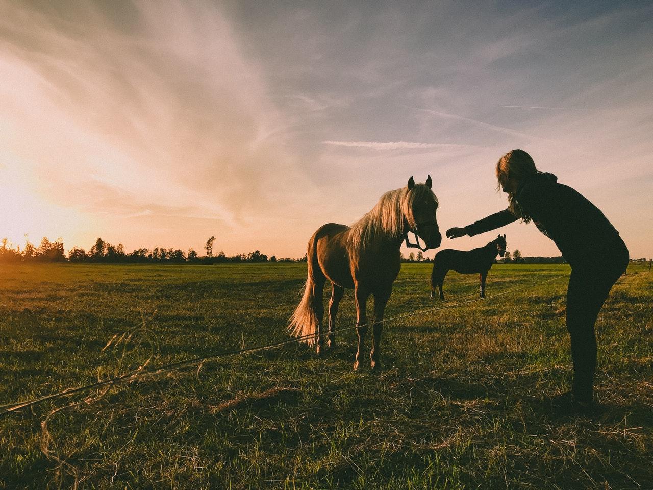 Najfajniejsze imiona dla konia. Jakie jest idealne imię dla klaczy?