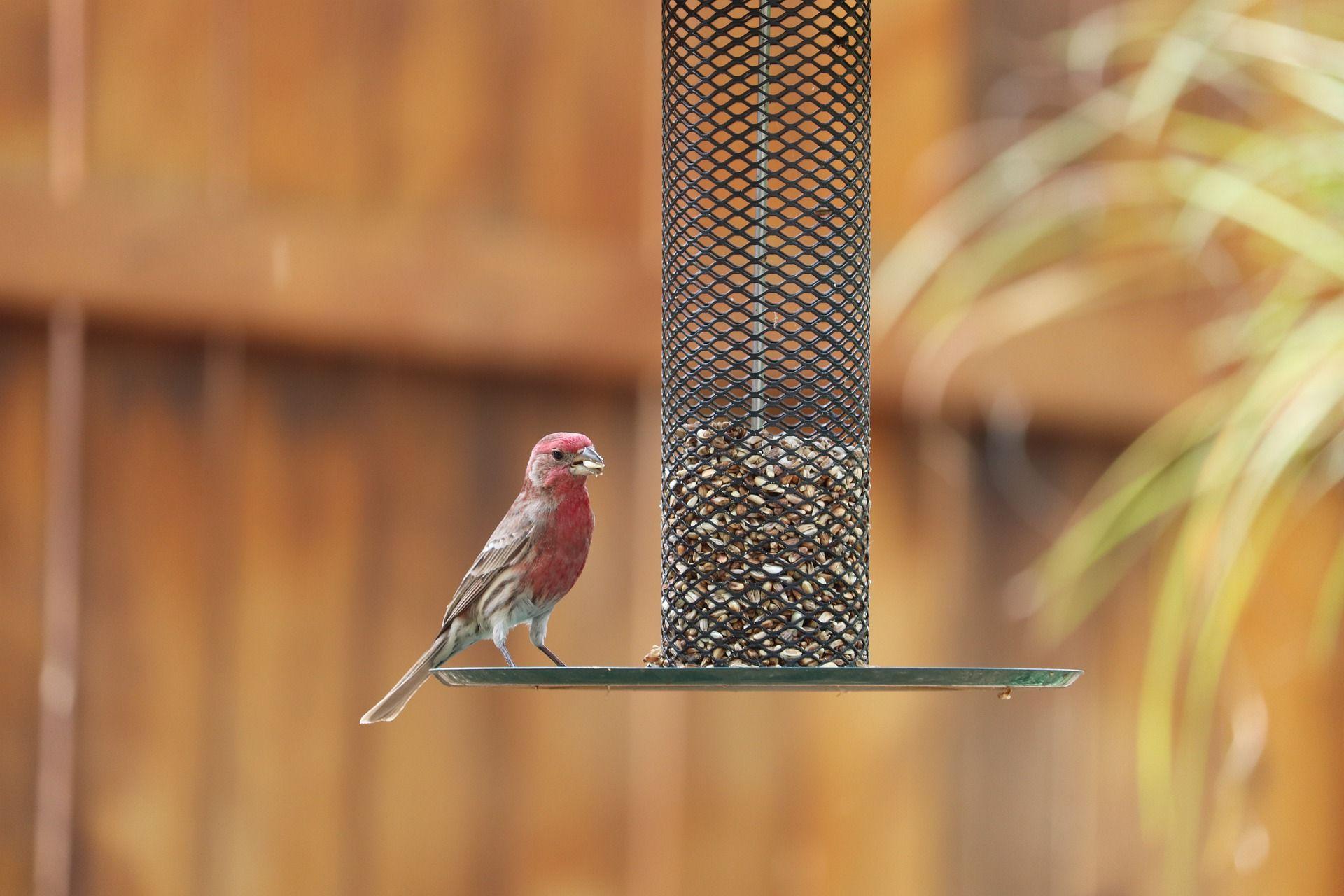 Karmnik dla ptaków z butelki, a może karmnik na nodze? Zobacz najlepsze projekty karmników dla ptaków na balkon i do ogrodu.