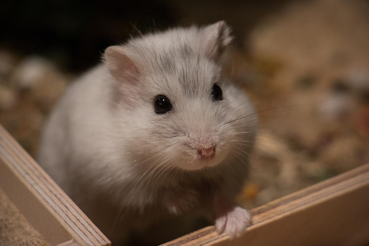 Jak powinno się urządzić małemu ssakowi klatkę?