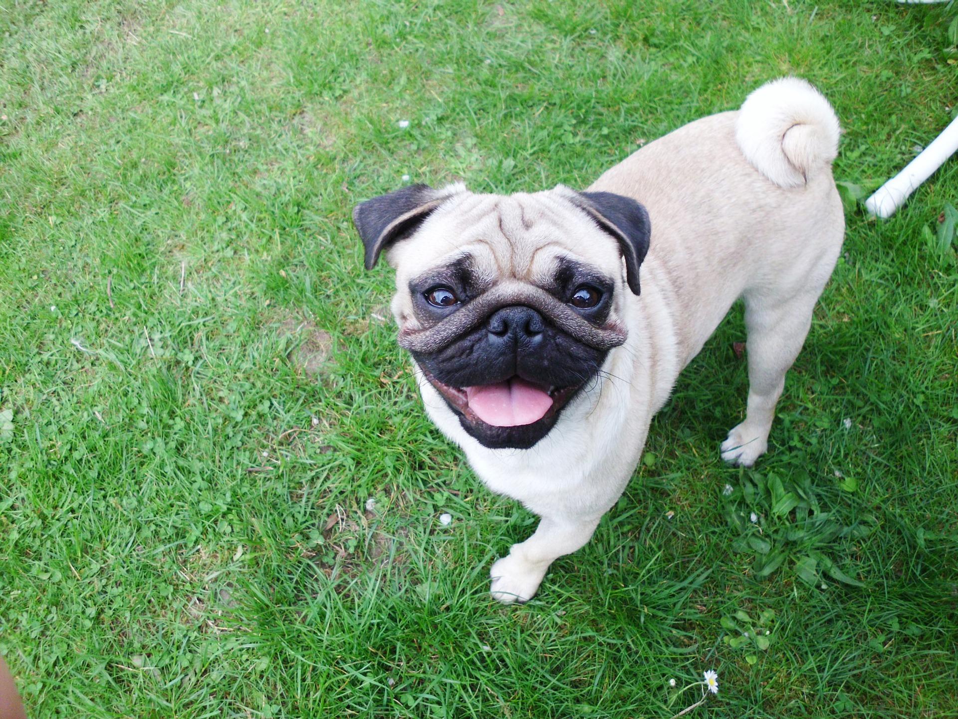 Jak karmić psa, aby jego dieta była zbilansowana?