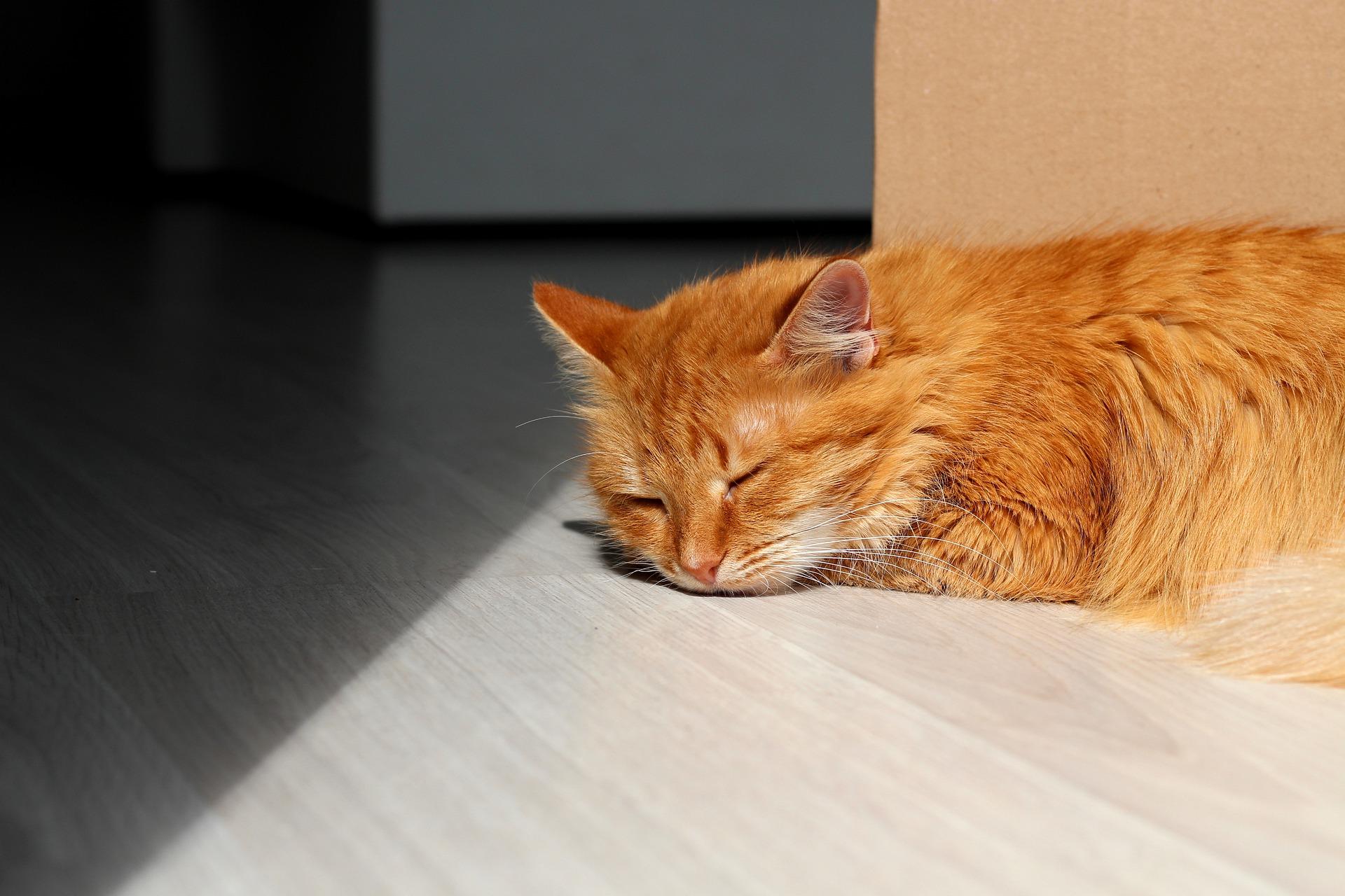 Dlaczego kot zamiast się cieszyć z Twojego powrotu, stał się smutny i obojętny? Już tłumaczymy to zachowanie kotów.