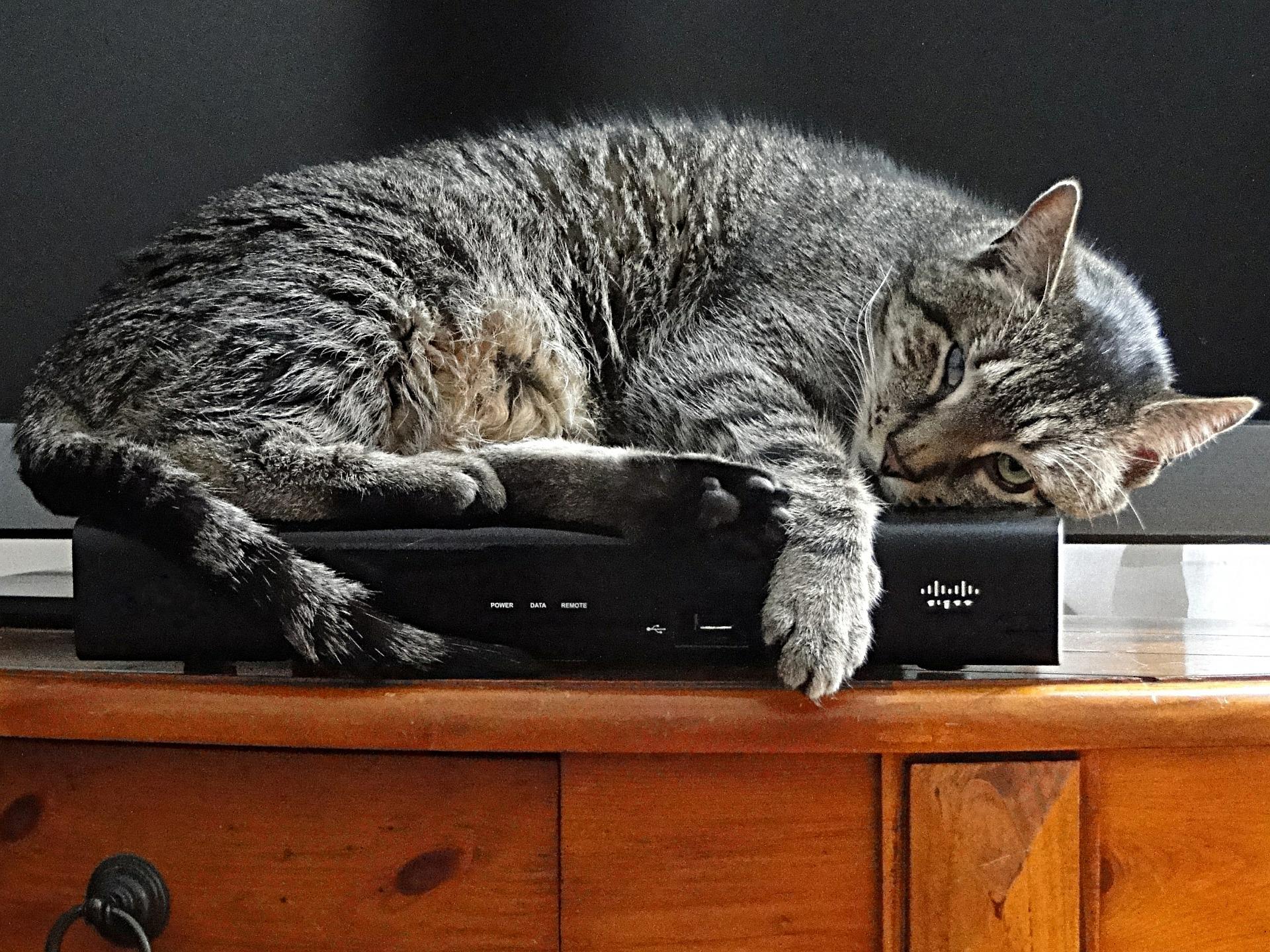 Chowanie się kota może mieć wiele przyczyn, również tych o podłożu chorobowym.
