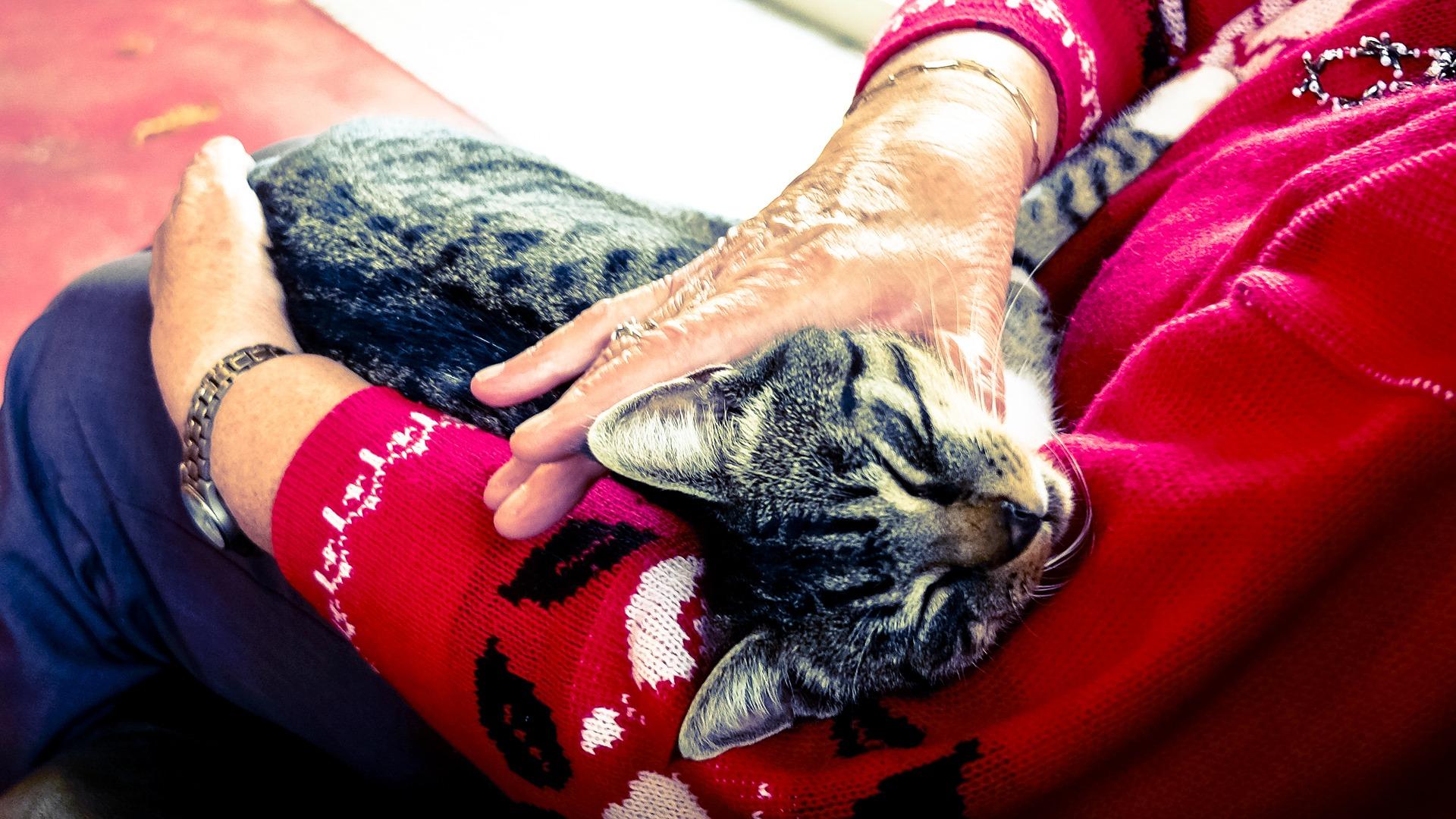 Odrobaczanie kota - po co to robić i jak często?