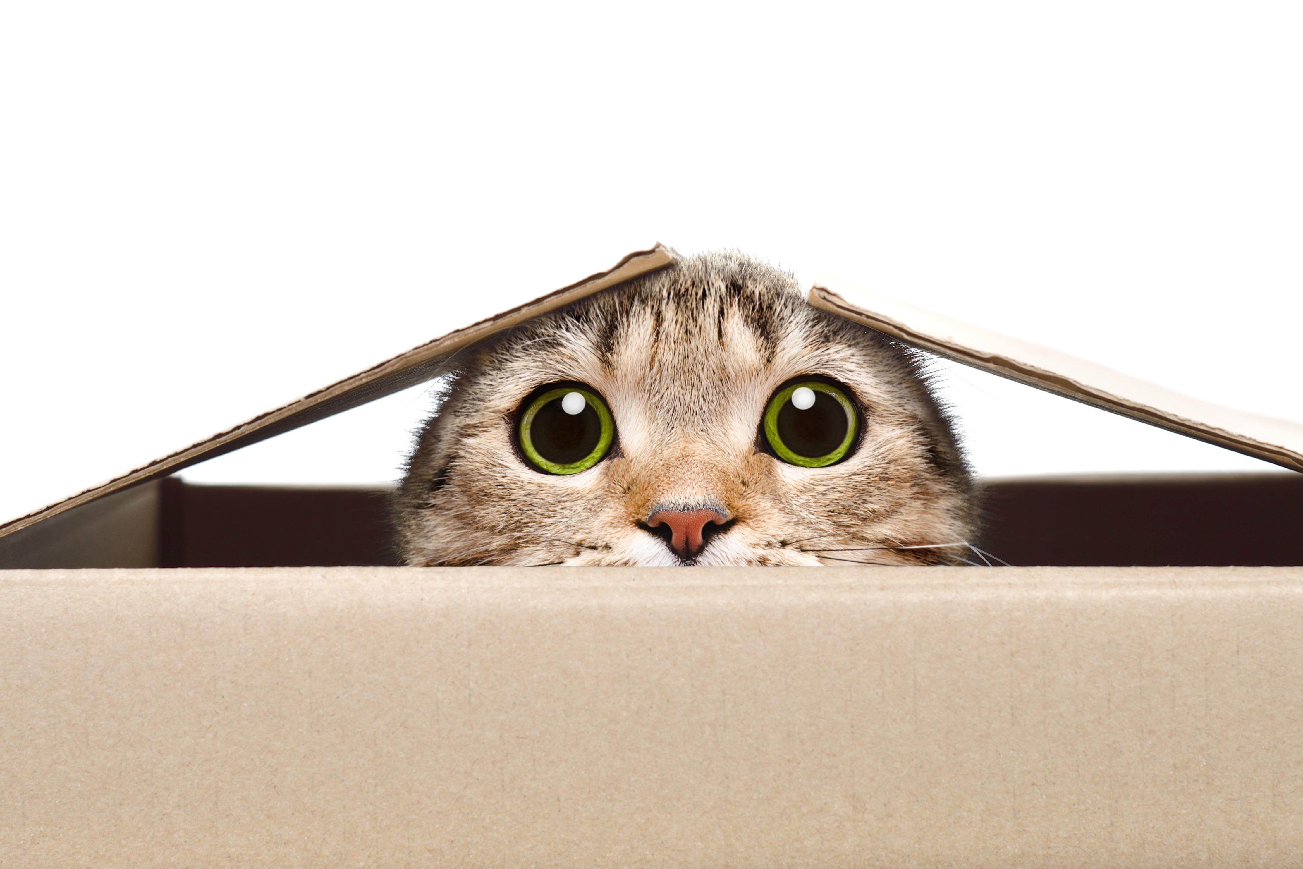 Nieodpowiednia kuweta dla kota jest przyczyną załatwiania się kota poza nią.