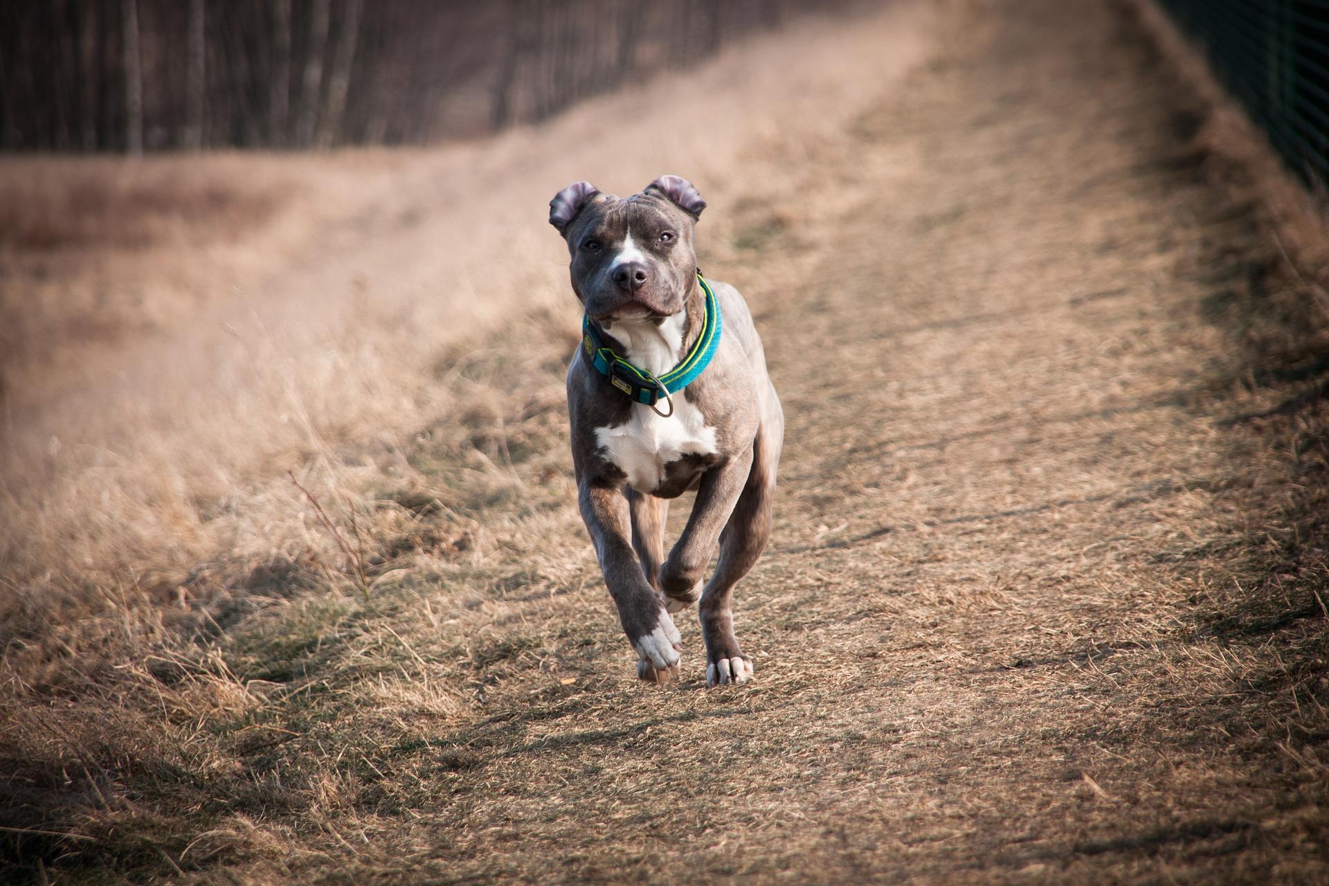 Jak bezpiecznie spacerować z psem, gdy na dworze już ciemno?