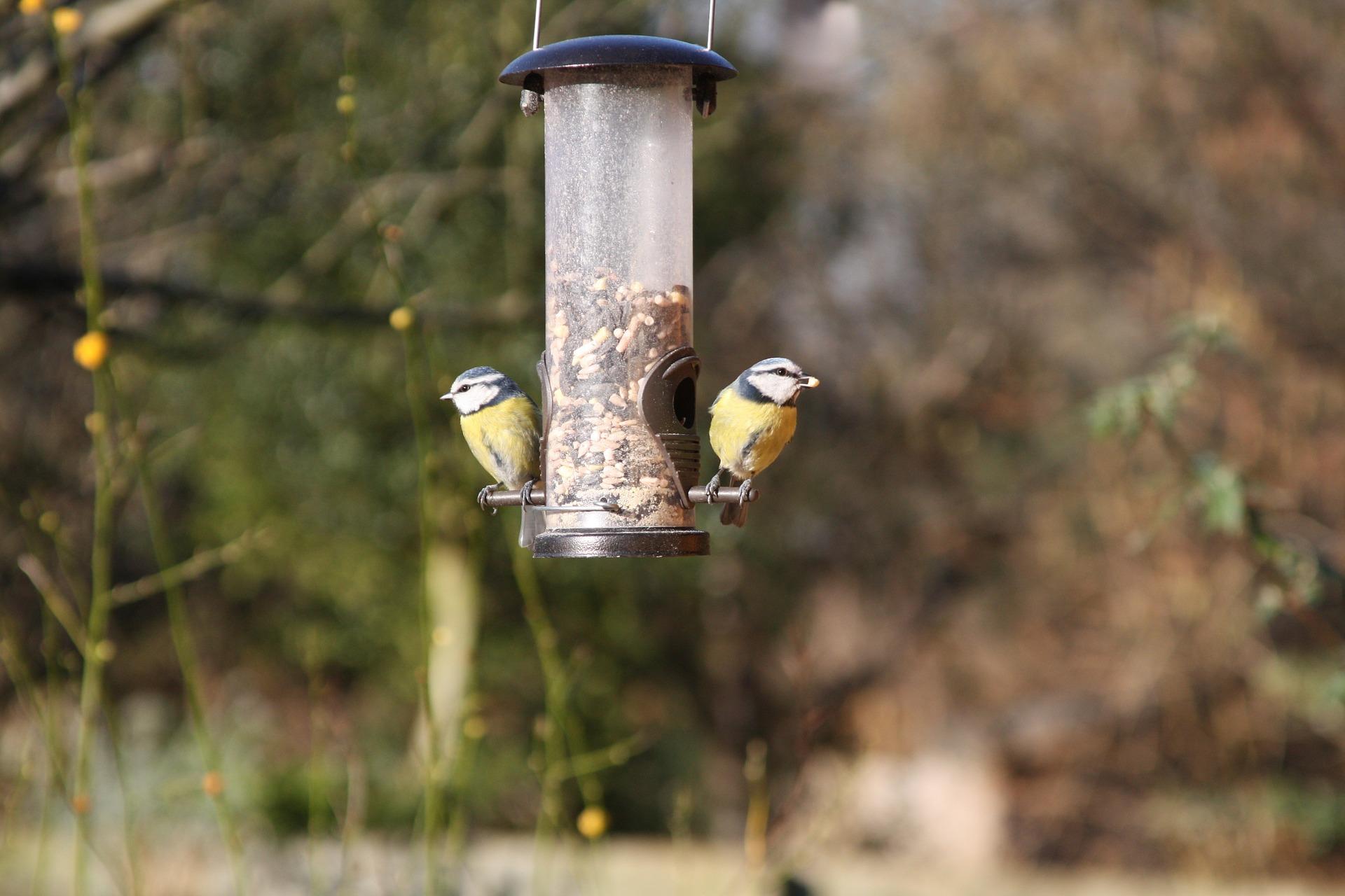 Jak dokarmiać ptaki zimą? Kiedy zacząć?