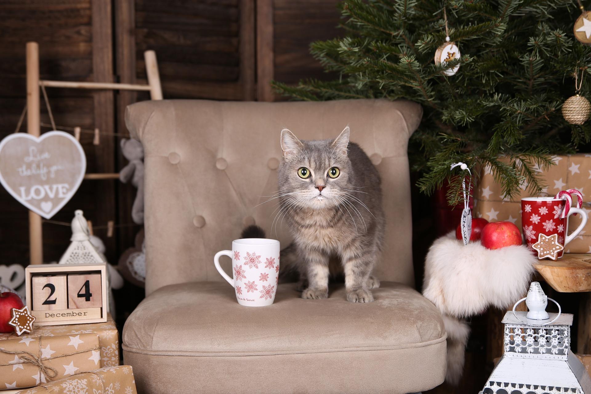 Świąteczny poradnik prezentów dla kotów. Czy masz już pomysł na prezent dla swojego mruczka?