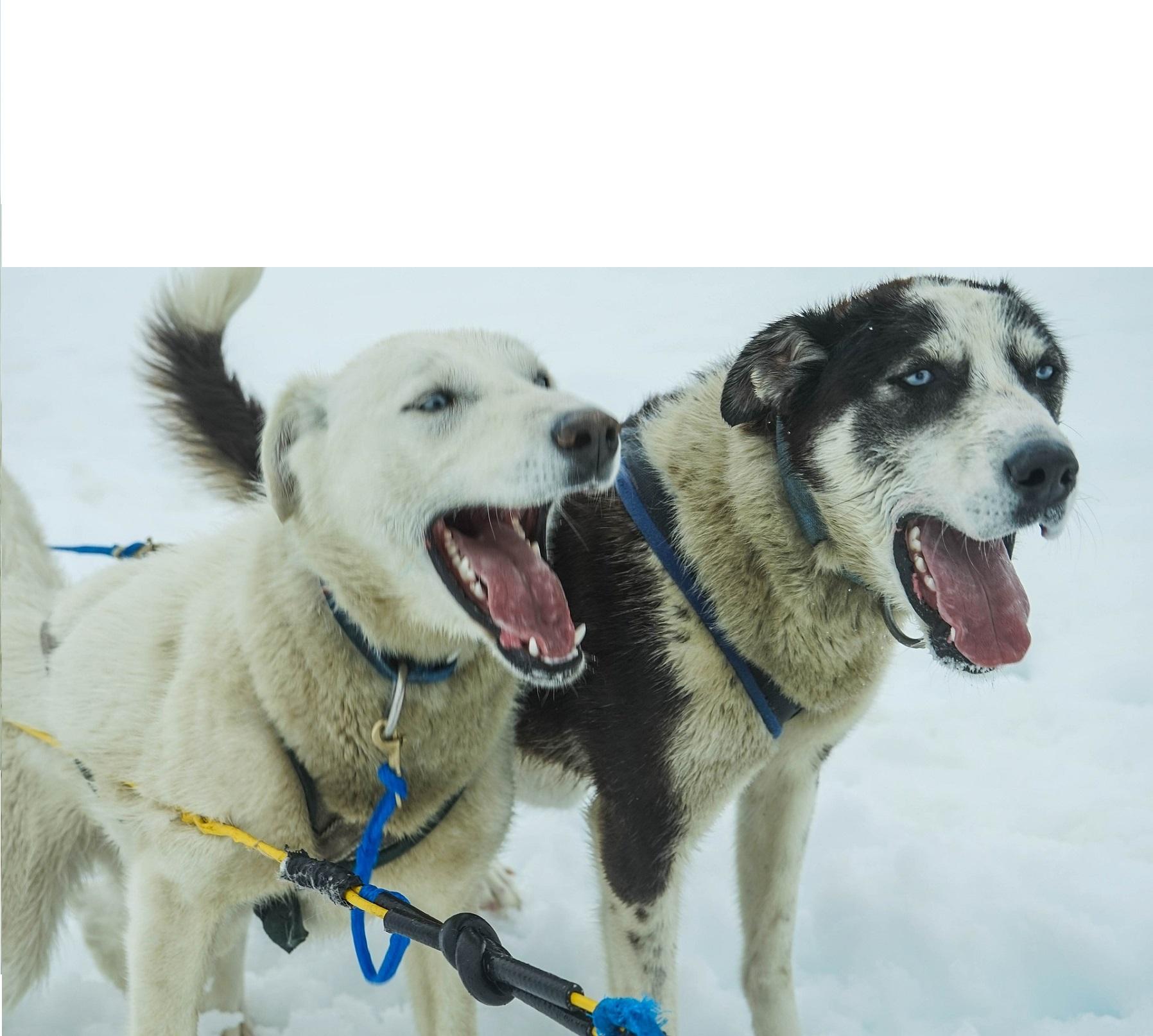 Szczekanie psa to jeden z jego sposobów komunikowania się.