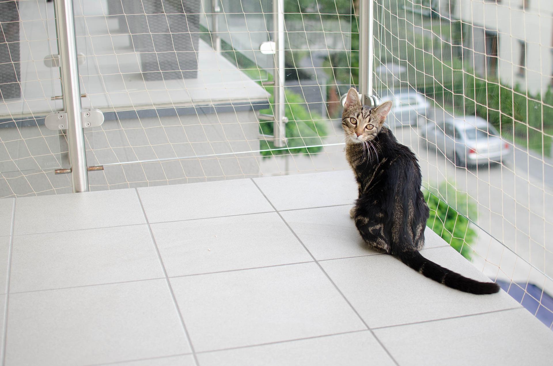 Niezabezpieczony balkon może doprowadzić do śmiertelnego wypadku - wypadnięcia lub wyskoczenia podczas polowania kota.