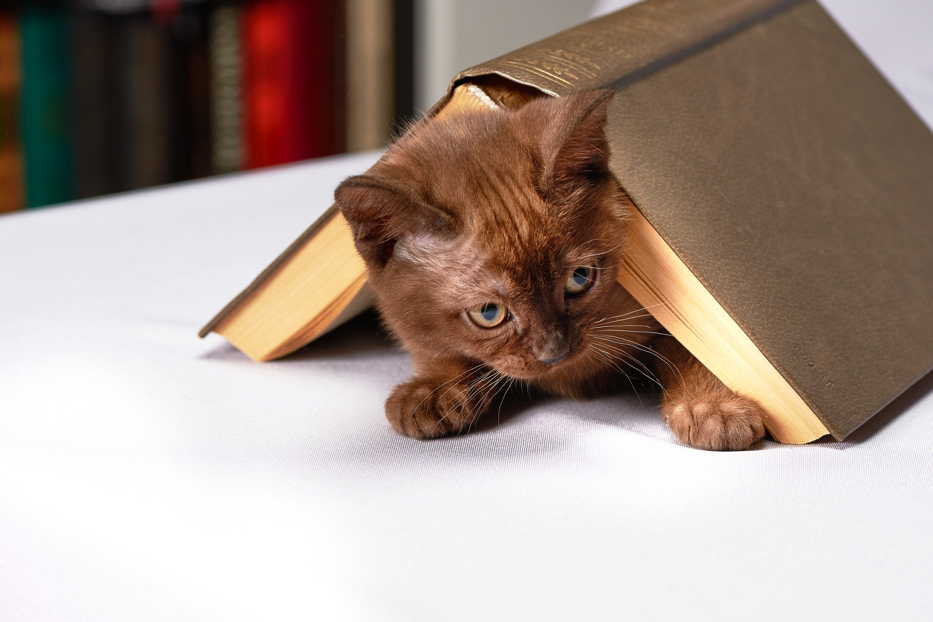 Aby odnieść sukces w wychowaniu kota, należy uwzględnić jego potrzeby i instynktowne zachowania. Są to uwarunkowania, których nie da się zmienić.