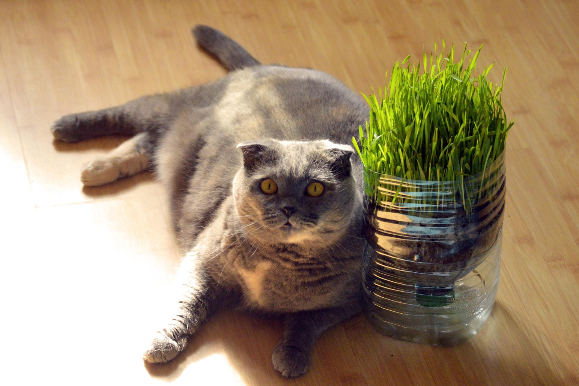 Zaopatrując się w trawę dla kota, należy kierować się przede wszystkim zdrowiem i bezpieczeństwem zwierzęcia. Pod tym względem optymalnym wyborem jest np. owies.