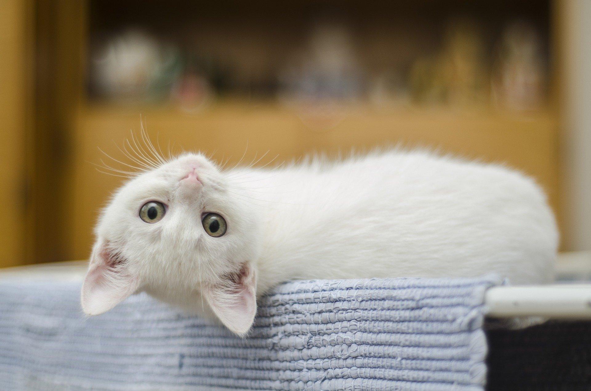 Robaki to nic innego jak pasożyty wewnętrzne występujące u zwierząt. Koty zazwyczaj są żywicielami pośrednimi pasożytów, które wyniszczają ich organizm i powodują wiele chorób. Kiedy i w jaki sposób odrobaczać koty?