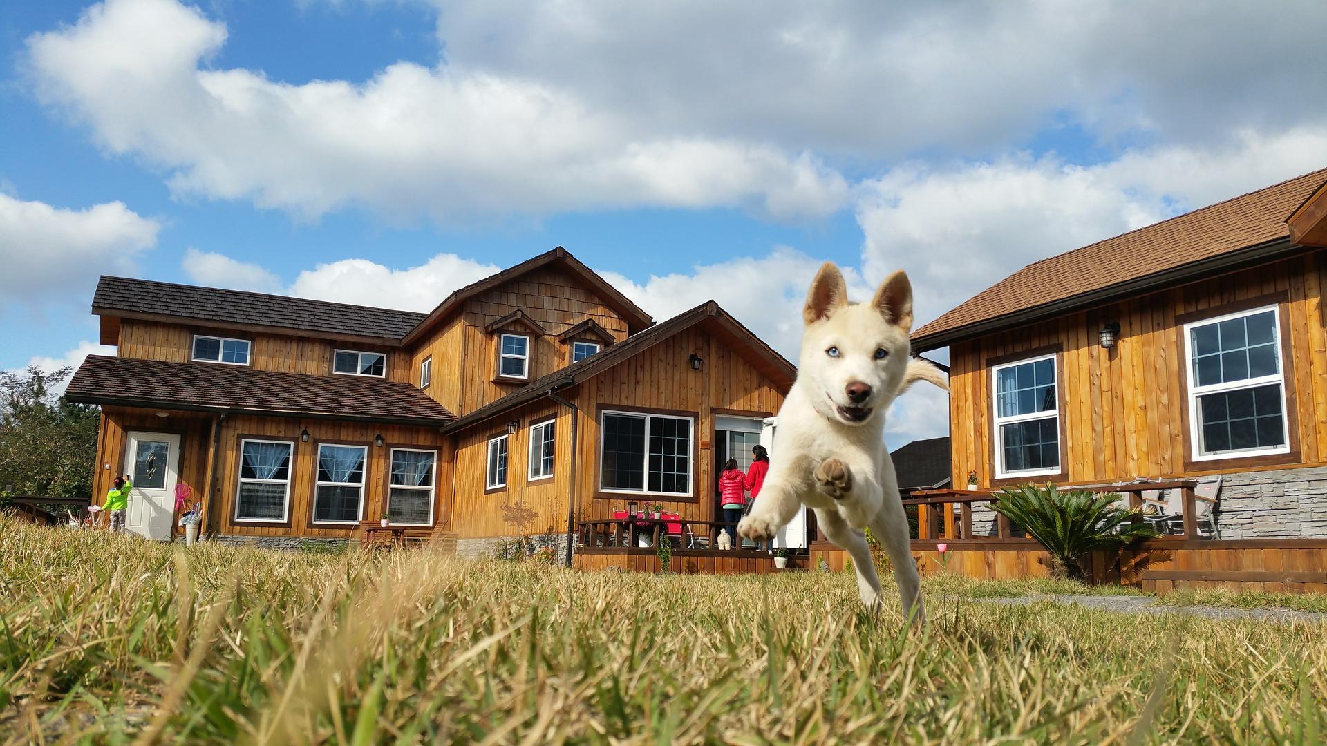 Kilka dni po przebyciu psa do nowego domu można rozpocząć trening samotnego pozostawania. Jak właściwie go przeprowadzić?