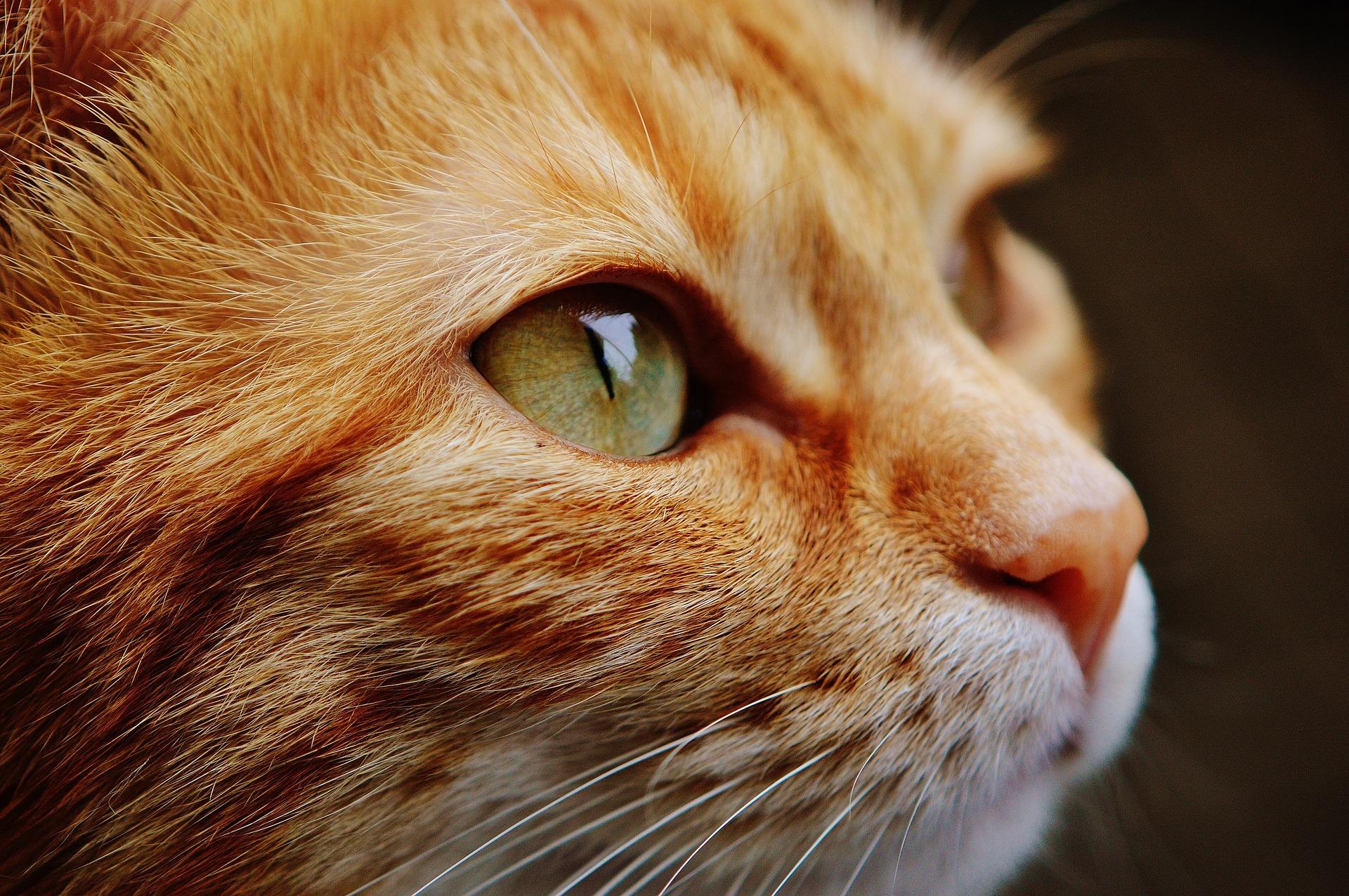Kot rozróżnia niewielki zakres barw, ale ma zdolność widzenia w niemal całkowitych ciemnościach.