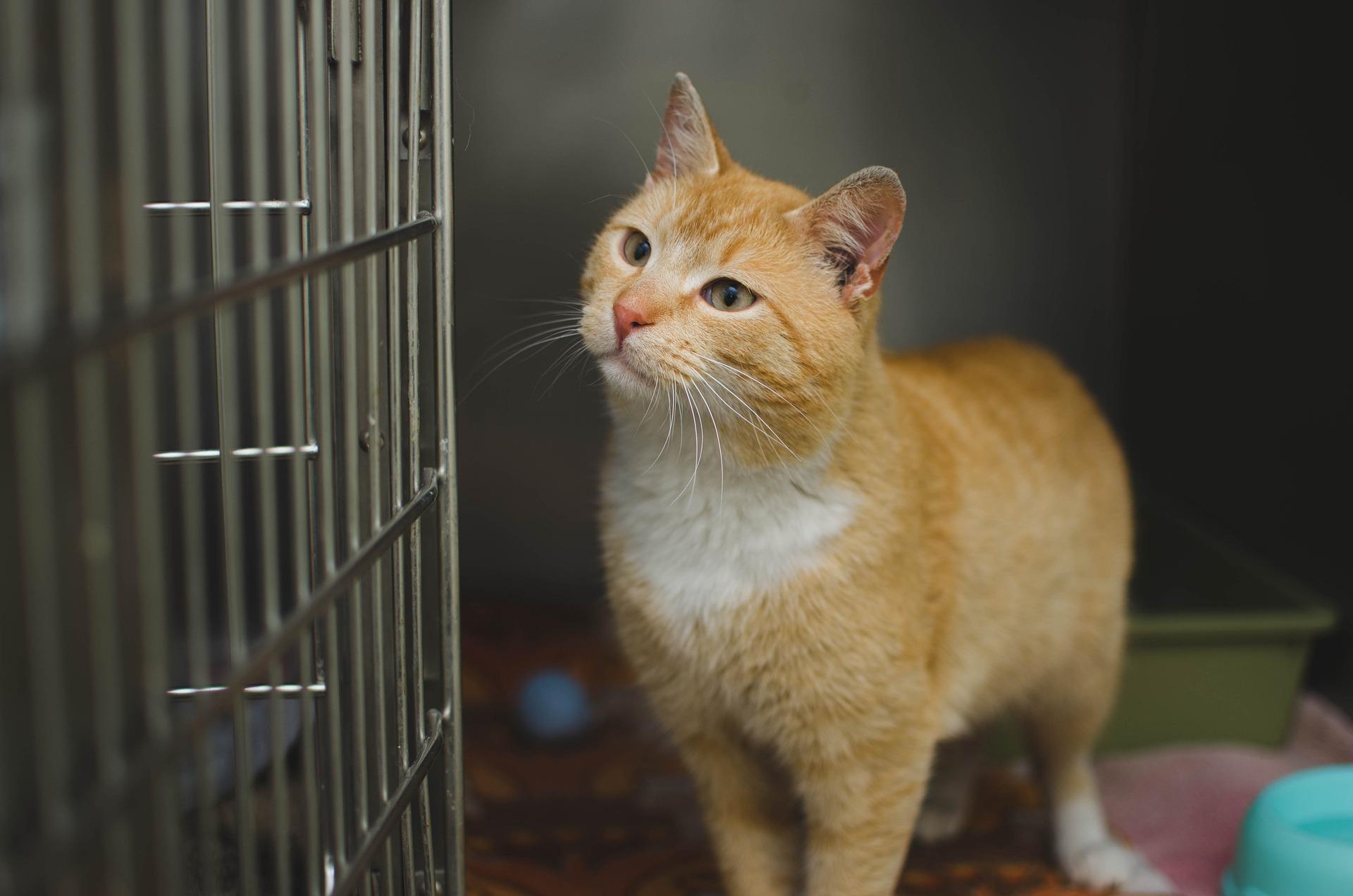 Szczepienie kota nie jest w Polsce ustawowo obowiązkowe. Jednak dzięki niemu zwierzę uniknie wielu groźnych chorób.