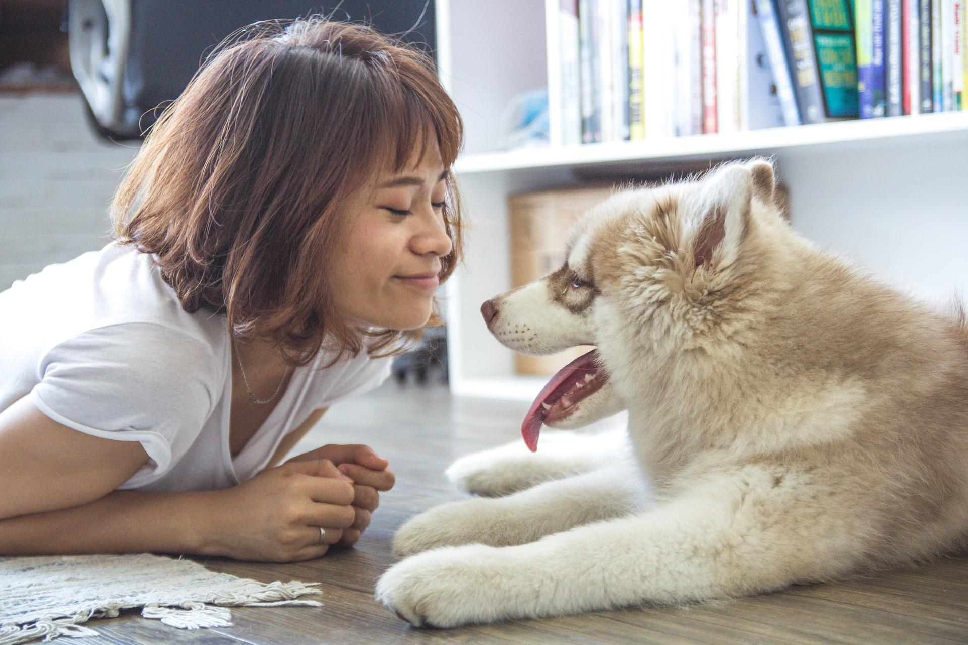 Zabawa z psem w domu nie musi być nudna. Zaproponuj swojemu psu zabawy intelektualne i fizyczne w domowym zaciszu.