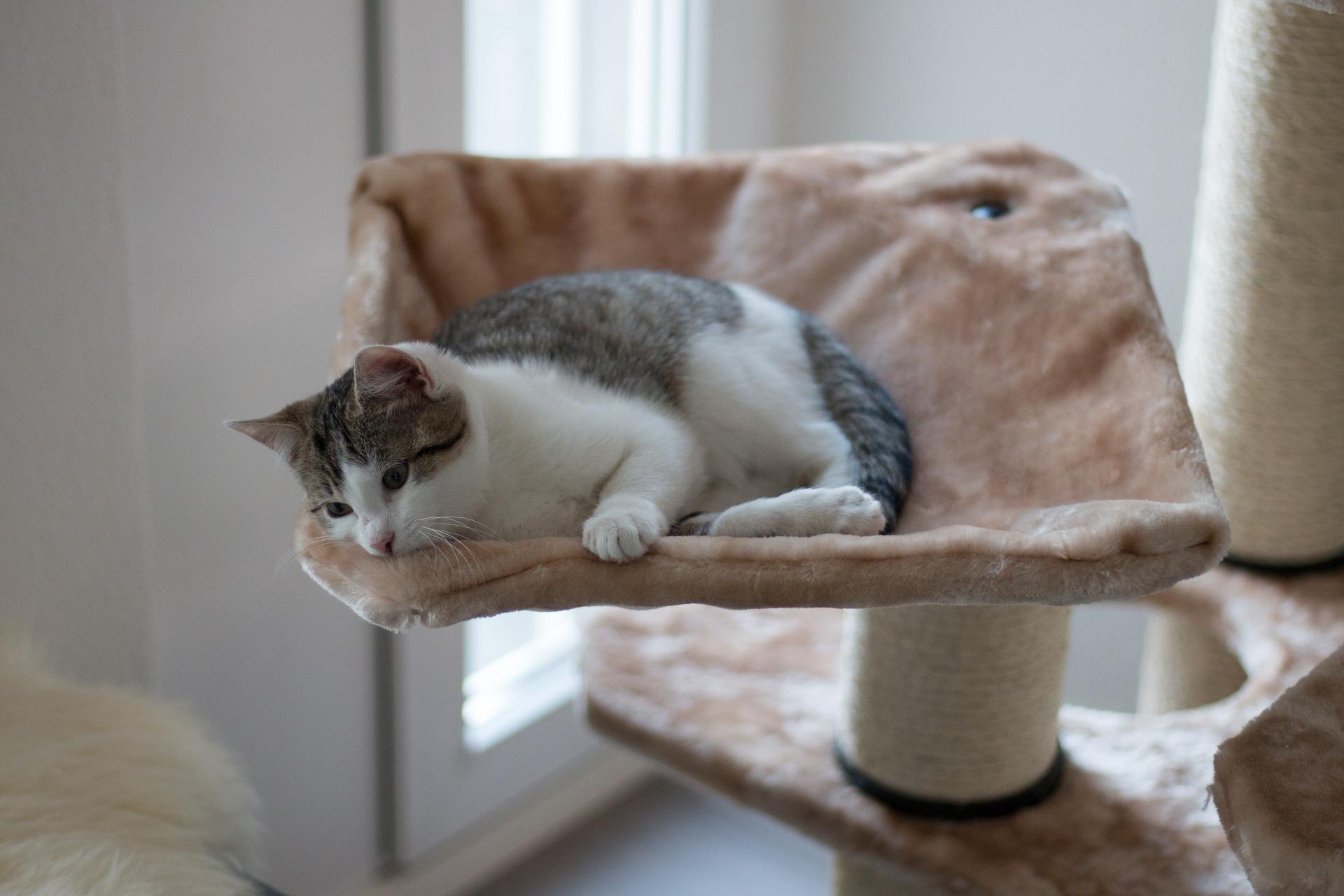 Hamak dla kota to jeden z najbardziej trafionych pomysłów na legowisko, ponieważ zaspokaja wiele kocich potrzeb.