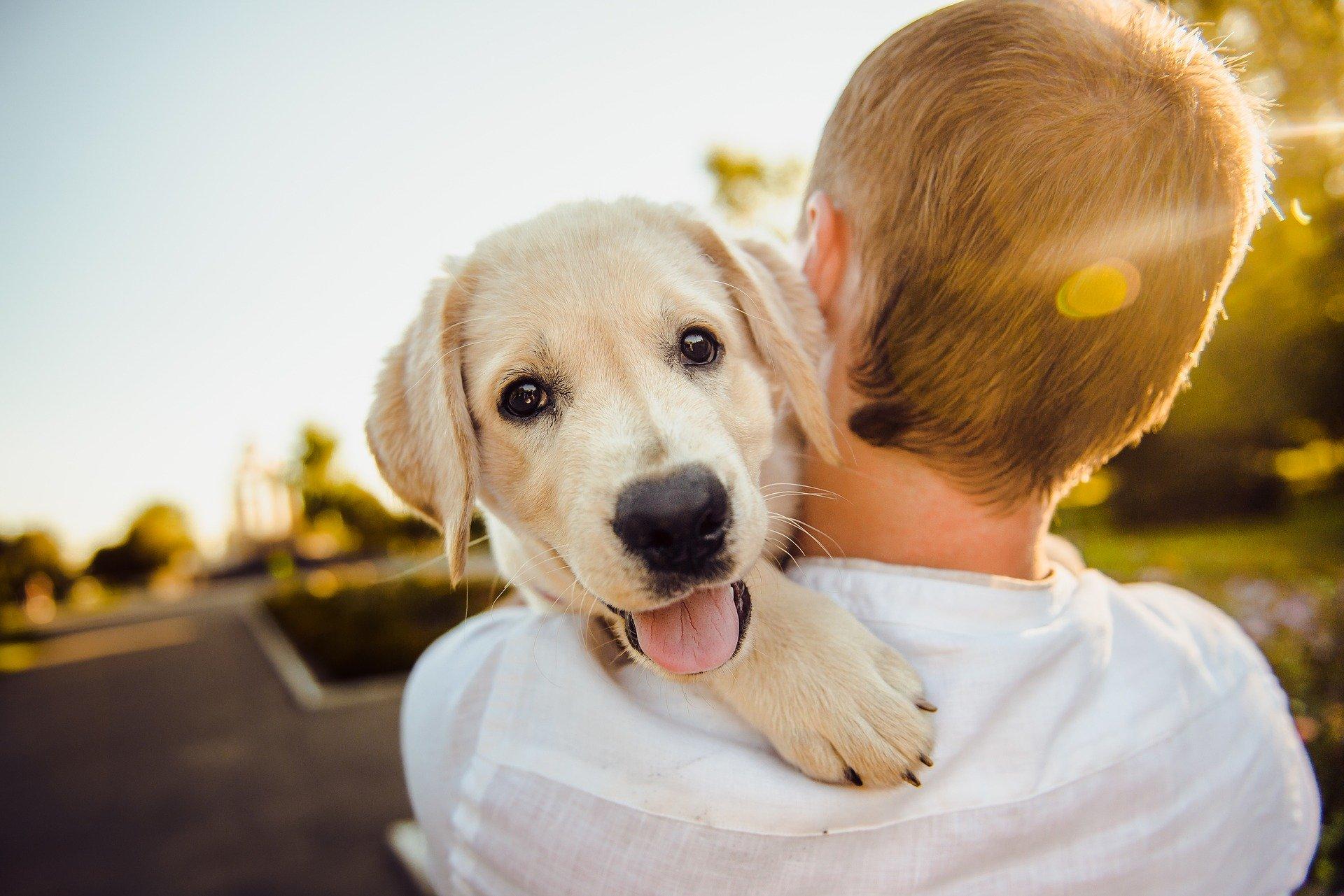 Wychowanie psa to proces, który wymaga konsekwencji i współpracy wszystkich członków rodziny.