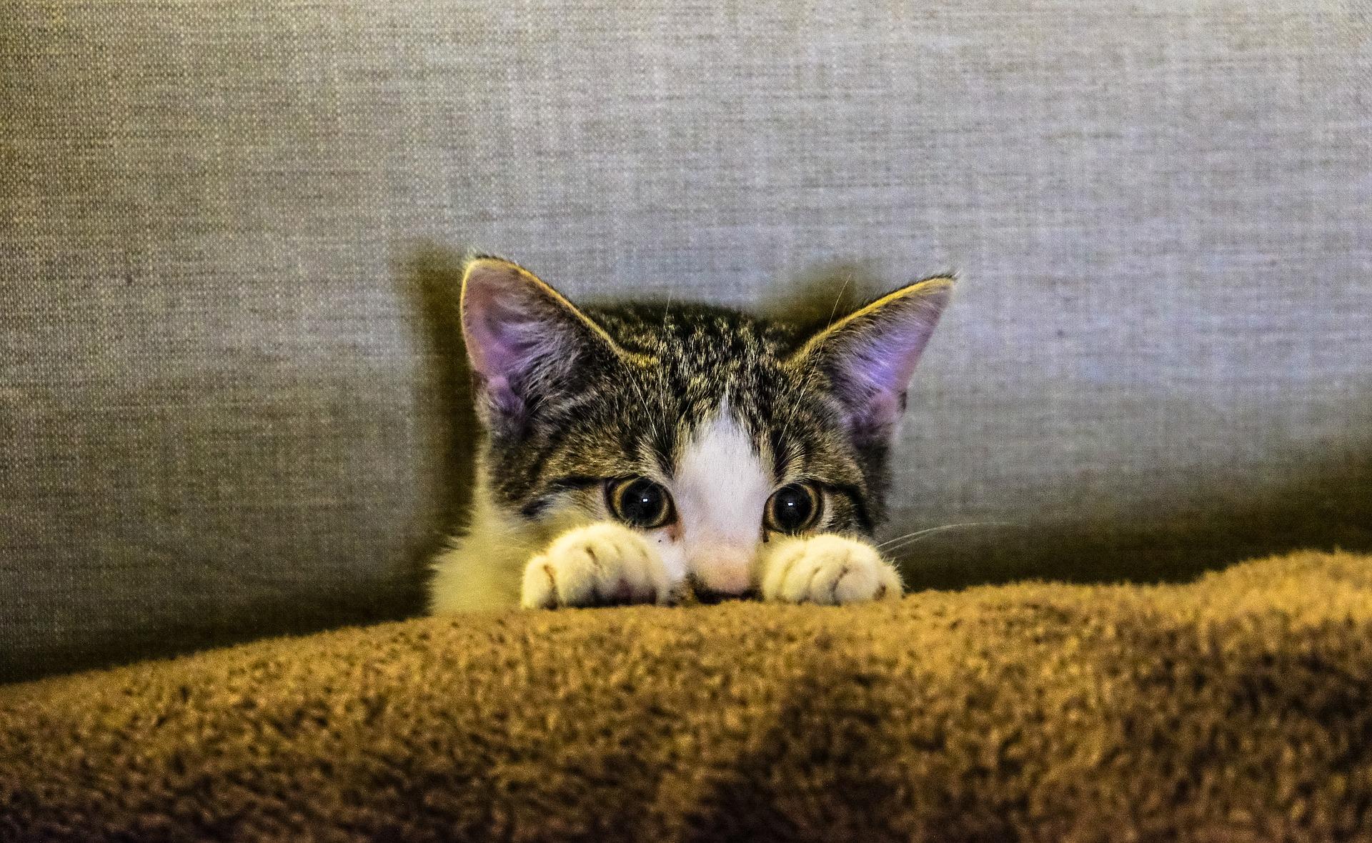 Sterylizacja kotki chroni ją przed wieloma chorobami i pozwala na ograniczenie zjawiska kociej bezdomności.
