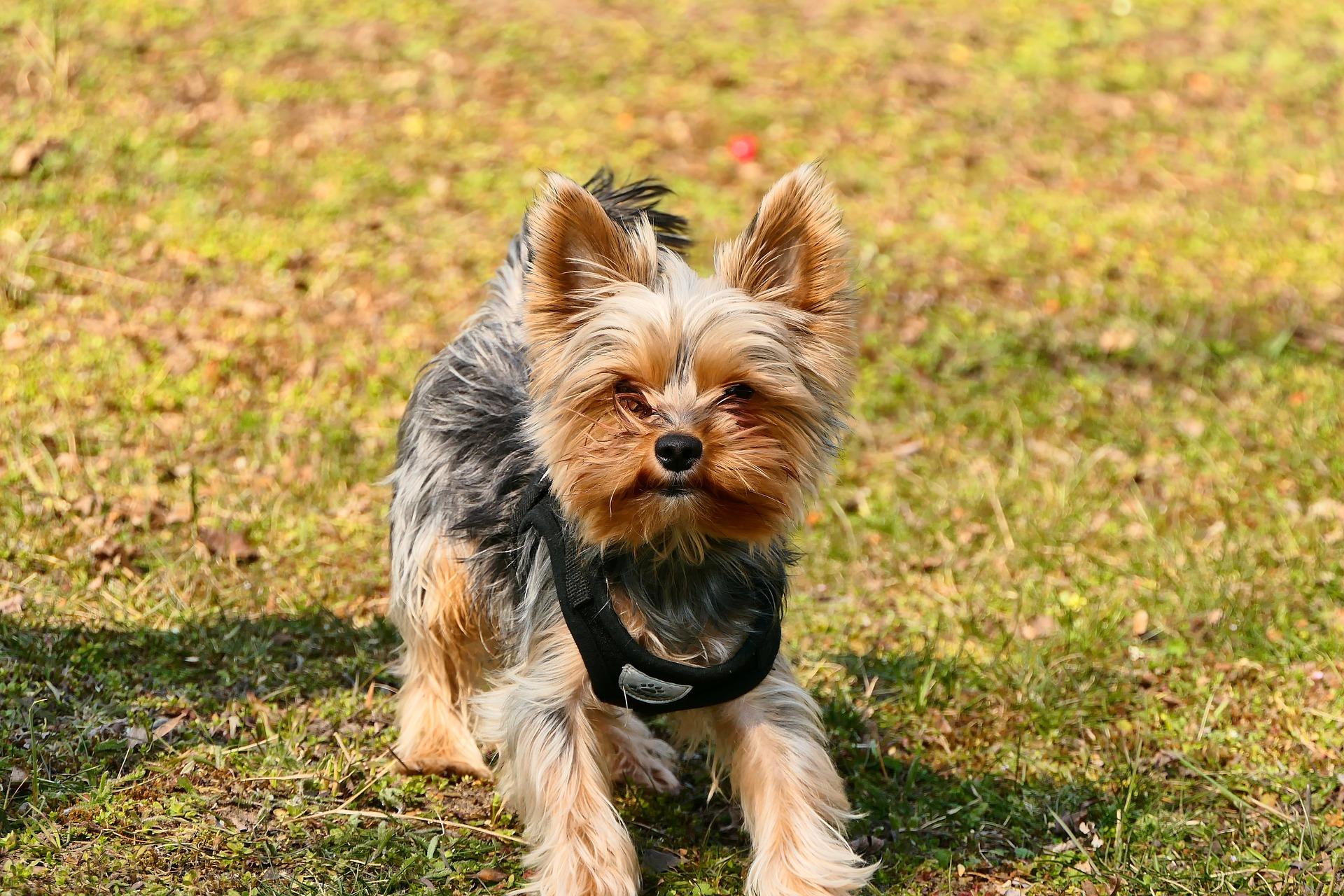 Kantar to rodzaj obroży zaciskowej zakładanej na pysk psa, która w trakcie tresury oddziałuje na zachowanie psa.
