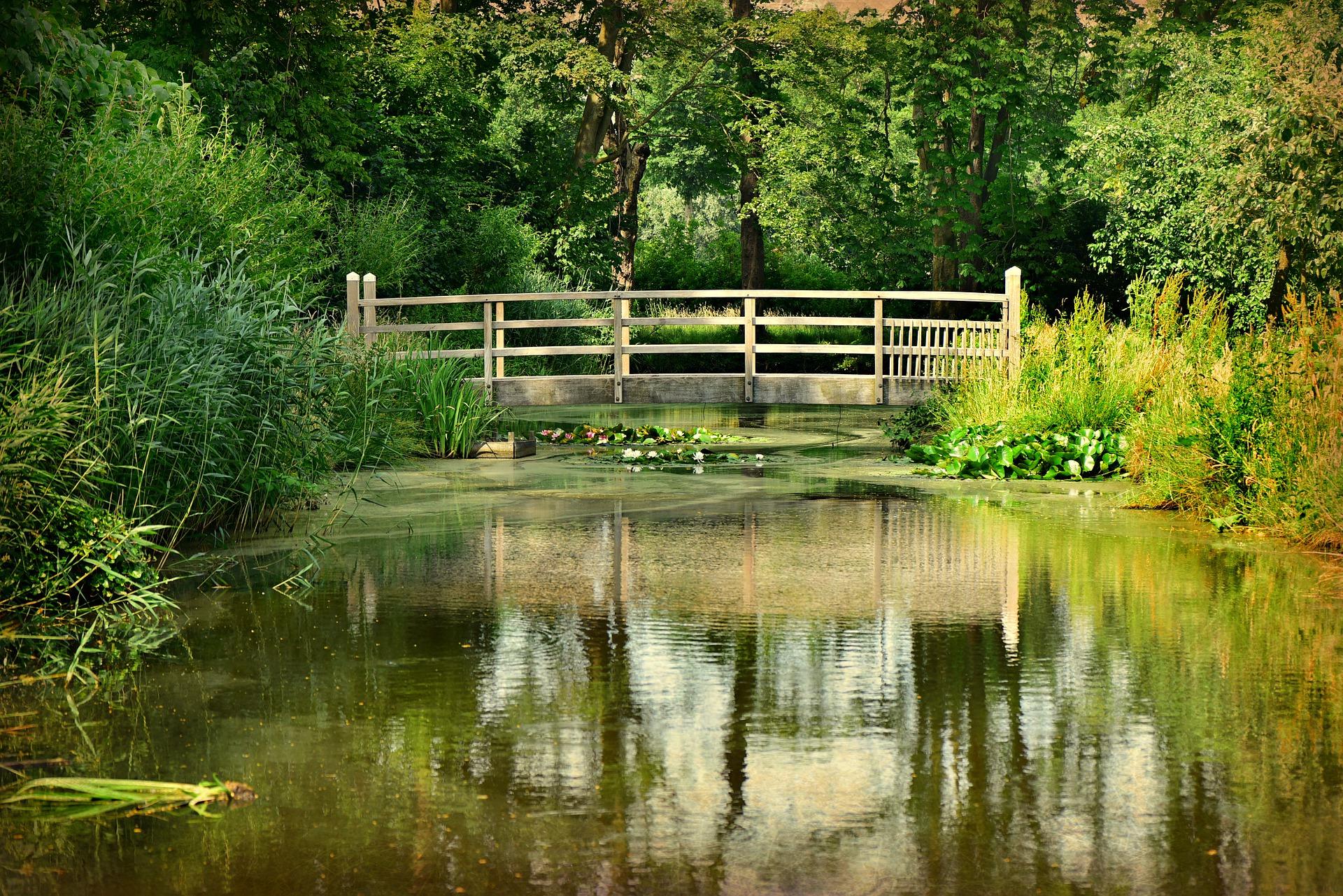Oczko wodne w ogrodzie to ponadczasowy element dekoracyjny, zwłaszcza jeśli obsadzone jest roślinami i tryska w nim woda.