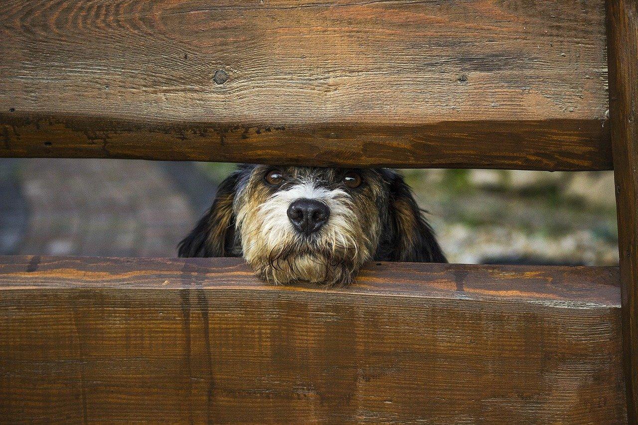 Pseudohodowla to niezarejestrowana hodowla nierasowych, nierodowodowych zwierząt domowych, głównie odnosząca się do psów.