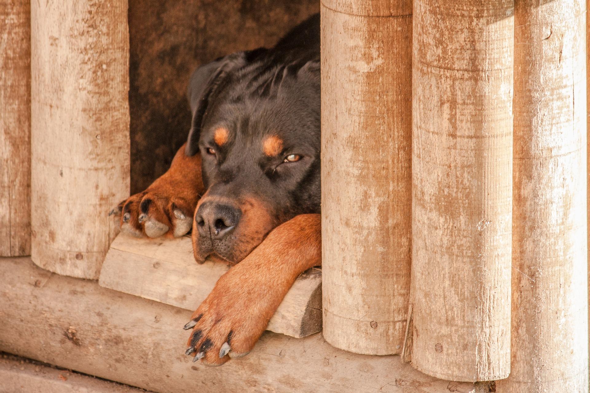 Budowa budy dla psa powinna uwzględniać potrzeby jej mieszkańca. Musi być wygodna, ciepła i przytulna.