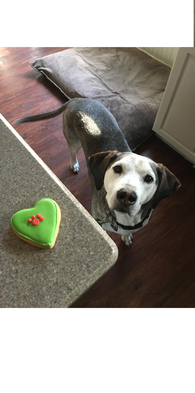 Tort dla psa pozwoli uświetnić dzień urodzin pupila. Jego wykonanie jest sposobem na okazanie uczuć i dobrą zabawą.