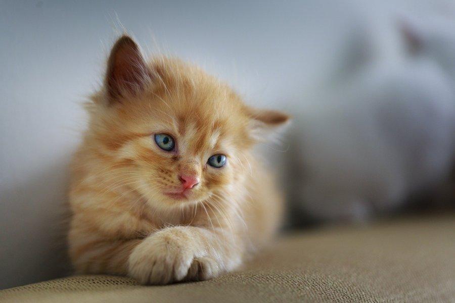 Koty potrzebują spokojnego miejsca do jedzenia, w oddali od kuwety, wody do picia i ciągów komunikacyjnych.
