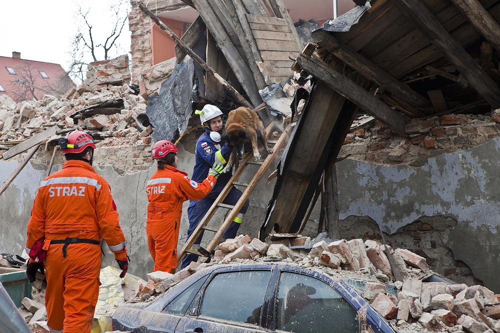 Pies odnaleziony w ruinach i zgliszczach domu.