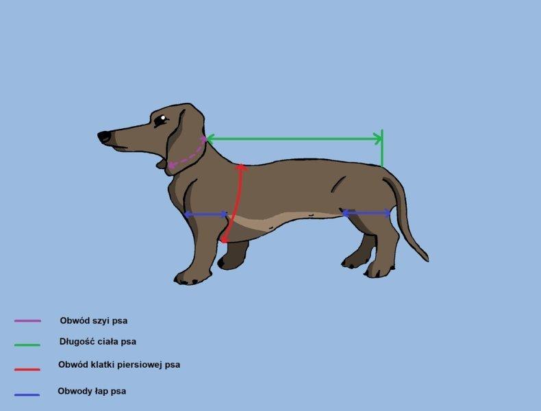Jak zmierzyć psa, aby dobrać ubranko?