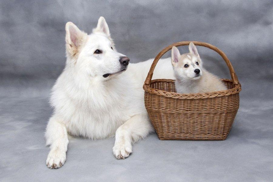 Suczka ze szczeniakiem. Jakie imię nadałbyś tym psom?