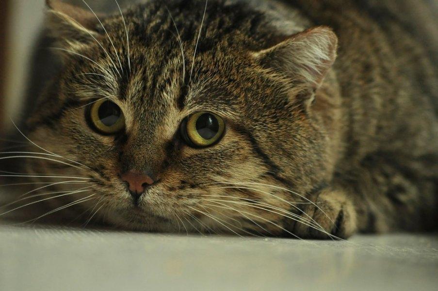Wystraszony kot ma powiększone źrenice i czujne wibrysy. Starajmy się zachować spokój i dać dzikiemu kotu przestrzeń i czas.