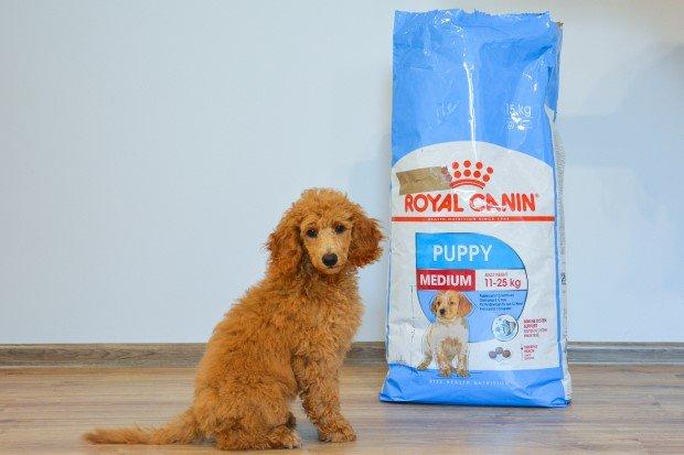 Royal Canin Puppy sucha karma dla szczeniąt ras średnich.