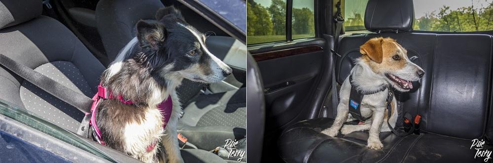 szelki dla psa do samochodu. Bezpieczeństwo podczas jazdy jest najważniejsze.
