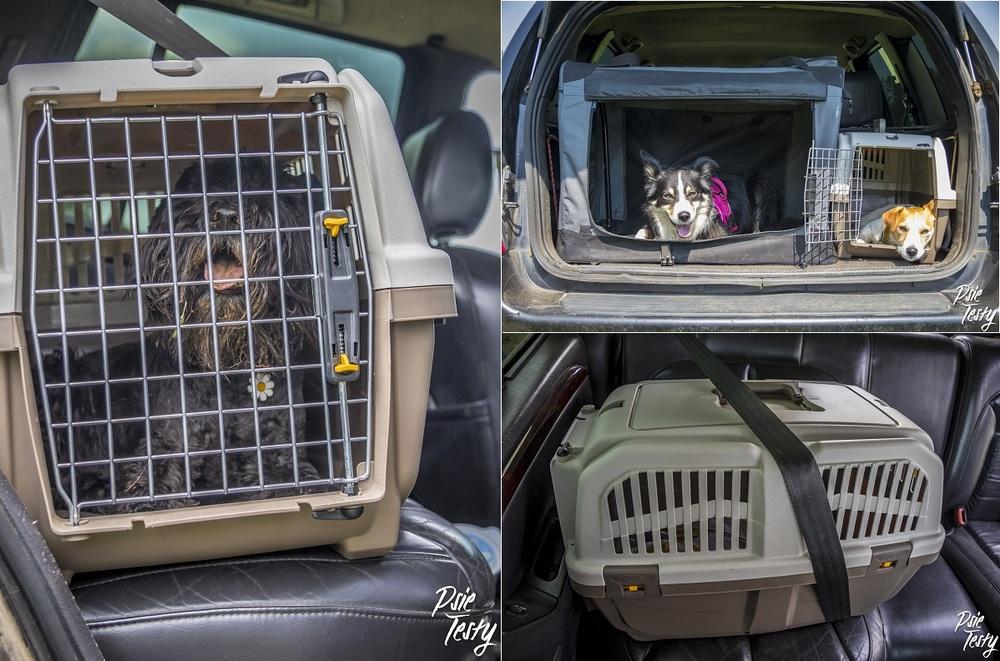 Pies powinien podróżować w transporterze.