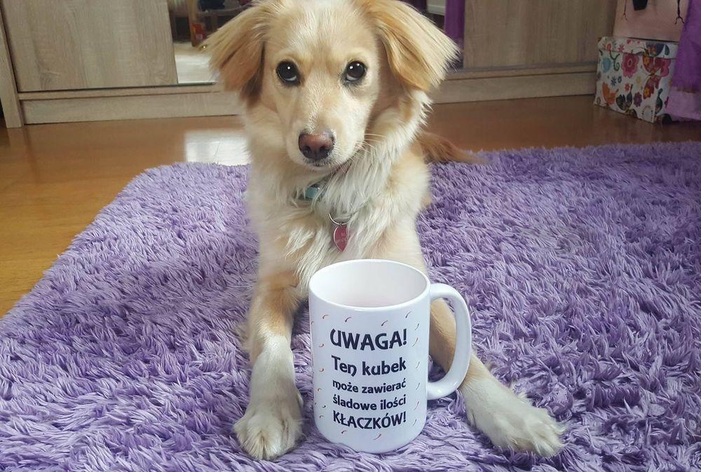 Warto adoptować psy i inne zwierzęta. One wszystkie potrzebują miłości.