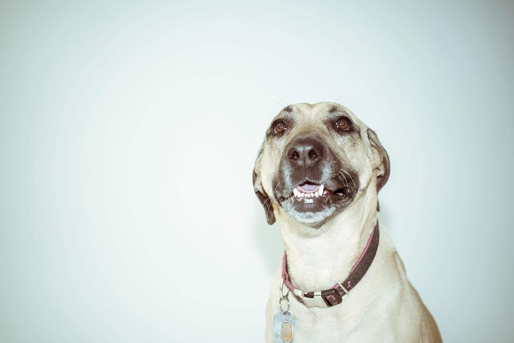 Wesołek może mieć imię dla psa odnoszące się do jego radosnego charakteru.