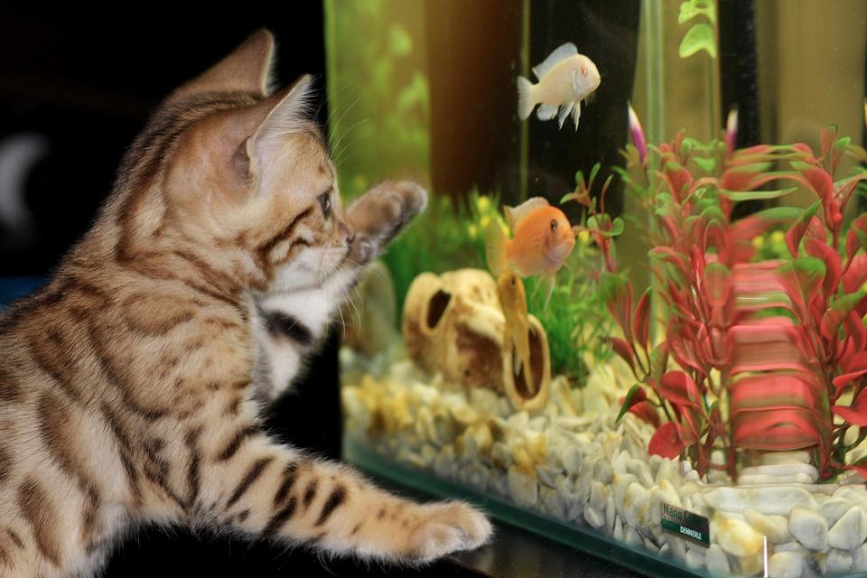 Akwarium  może być dobrą atrakcją również dla kotów.