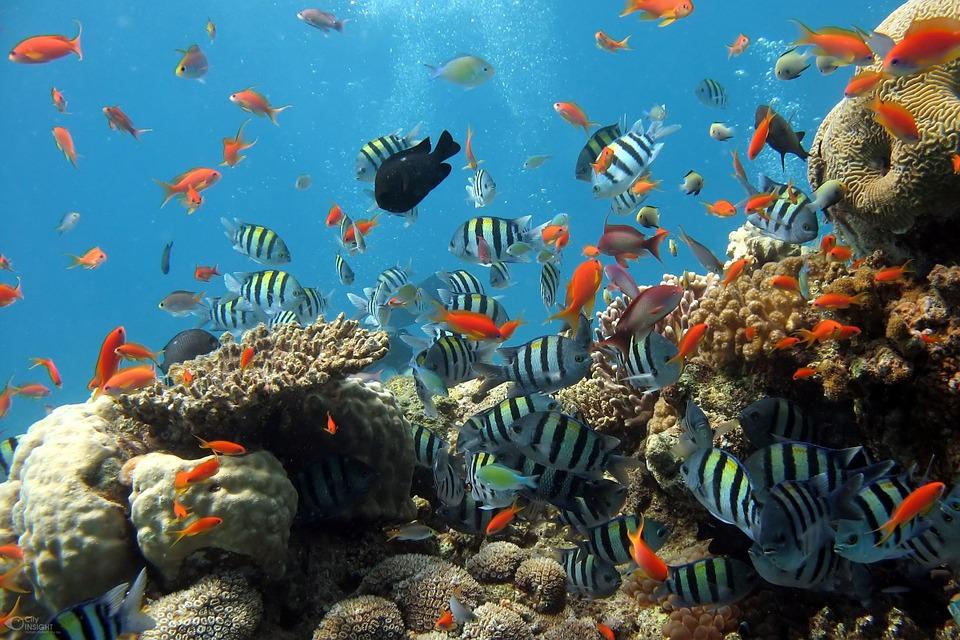 Każdy chciałby mieć w domu własny kawałek rafy koralowej. Przy dużym wkładzie pracy i czasu można osiągnąć podobny efekt.
