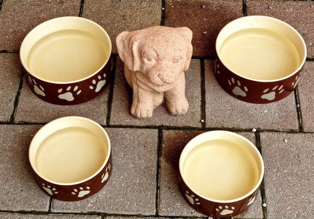 Wybór karmy dla swojego zwierzaka to istotna kwestia, z która musi się zmierzyć każdy opiekun. Czym napełnić miski psa lub kota?