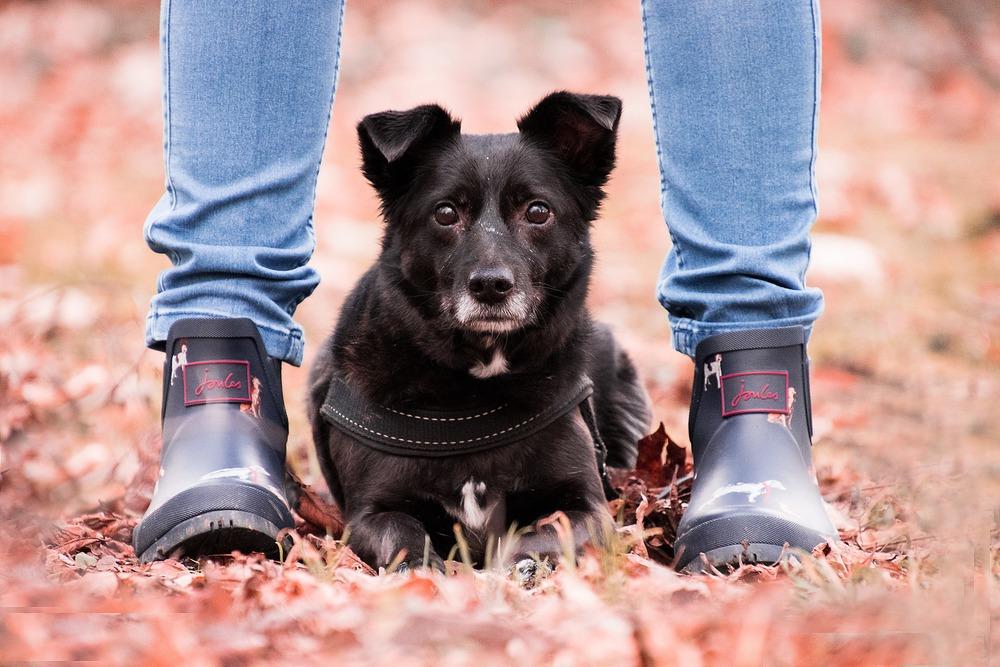 Pies okazuje zaufanie na parę sposobów, jednym z nich jest chęć spędzania wspólnie czasu i np. przesiadywania między nogami.