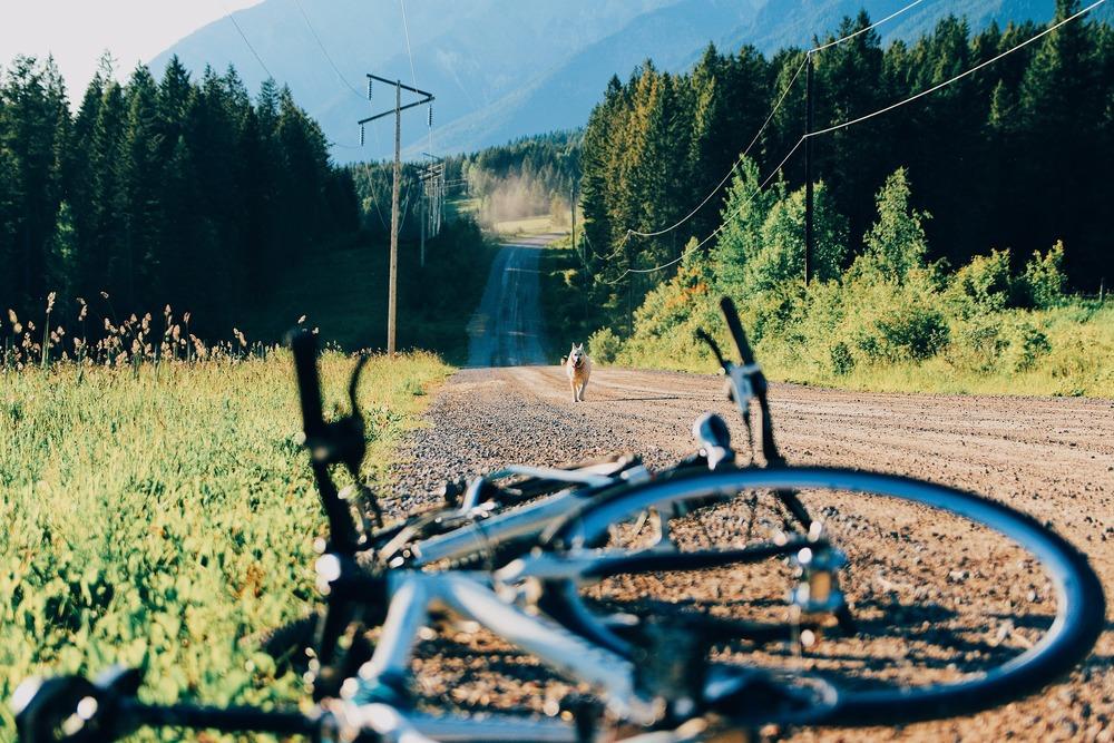 Po polnej drodze, między pagórkami, biegnie pies w stronę leżącego roweru