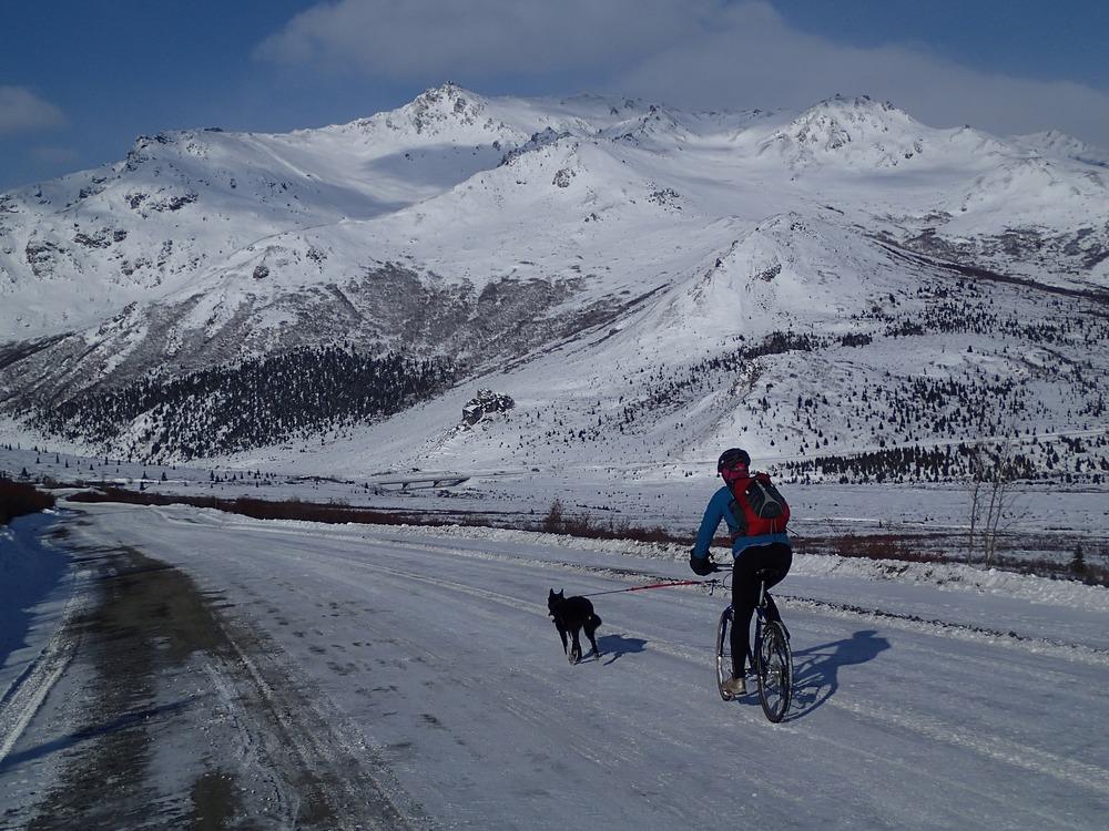 Pies biegnie przyczepiony do roweru, na którym jedzie mężczyzna. Wycieczka jest pośród ośnieżonych gór. Wycieczki rowerowe z psem mogą odbywać się nawet w zimę, jeżeli pies jest na to dobrze przygotowany.