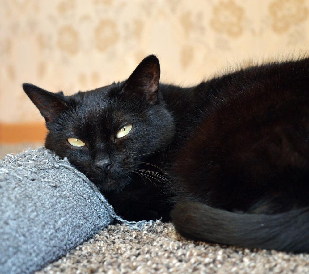 Czarny kot leży na podrapanym materiale.