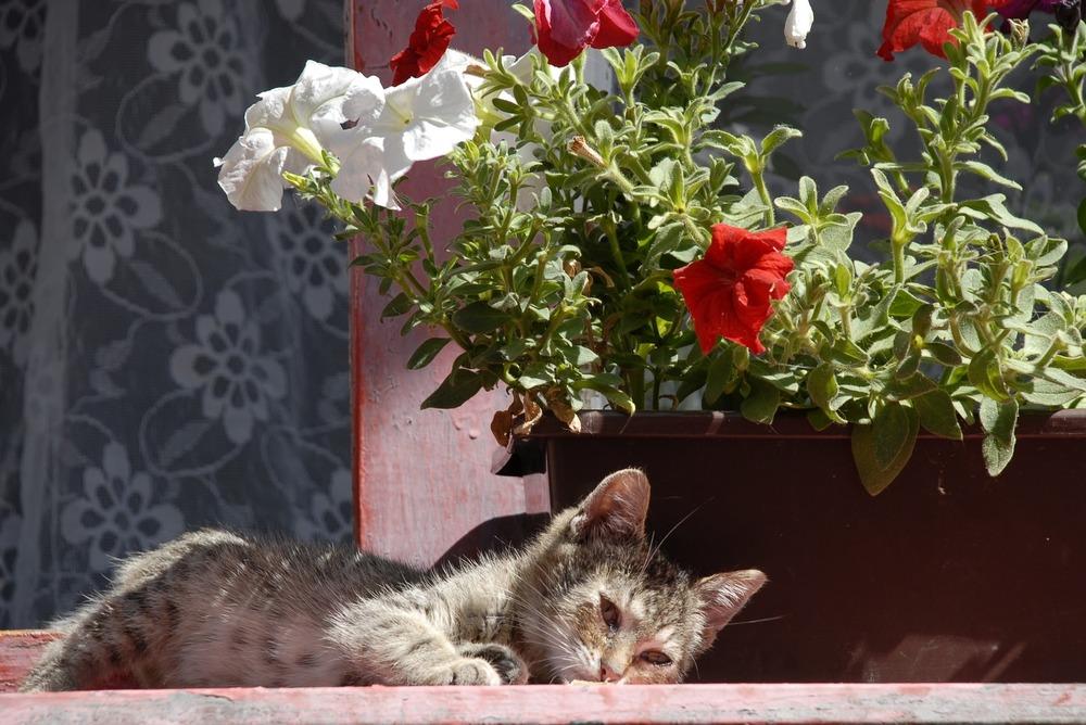 Osłabiony, bury, młody kot leży na dworze. Jego oczy są smutne i zrezygnowane